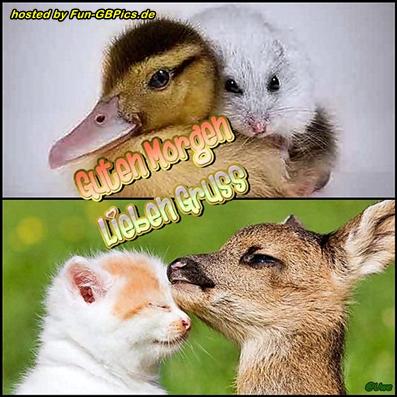 Guten Morgen Gruß Jappybild Facebook Bilder Gb Bilder
