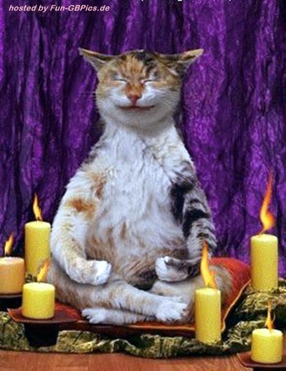 lustige katzen tierbilder gb facebook bilder gb bilder. Black Bedroom Furniture Sets. Home Design Ideas