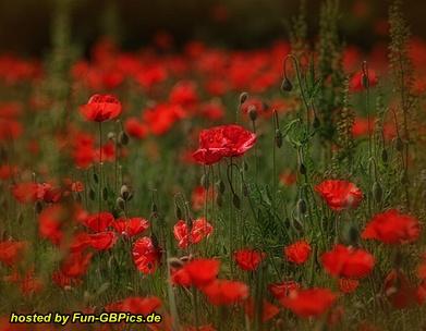 Blumen Bilder Whatsapp Bilder