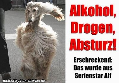 Alkohol und Party Whatsapp Bilder